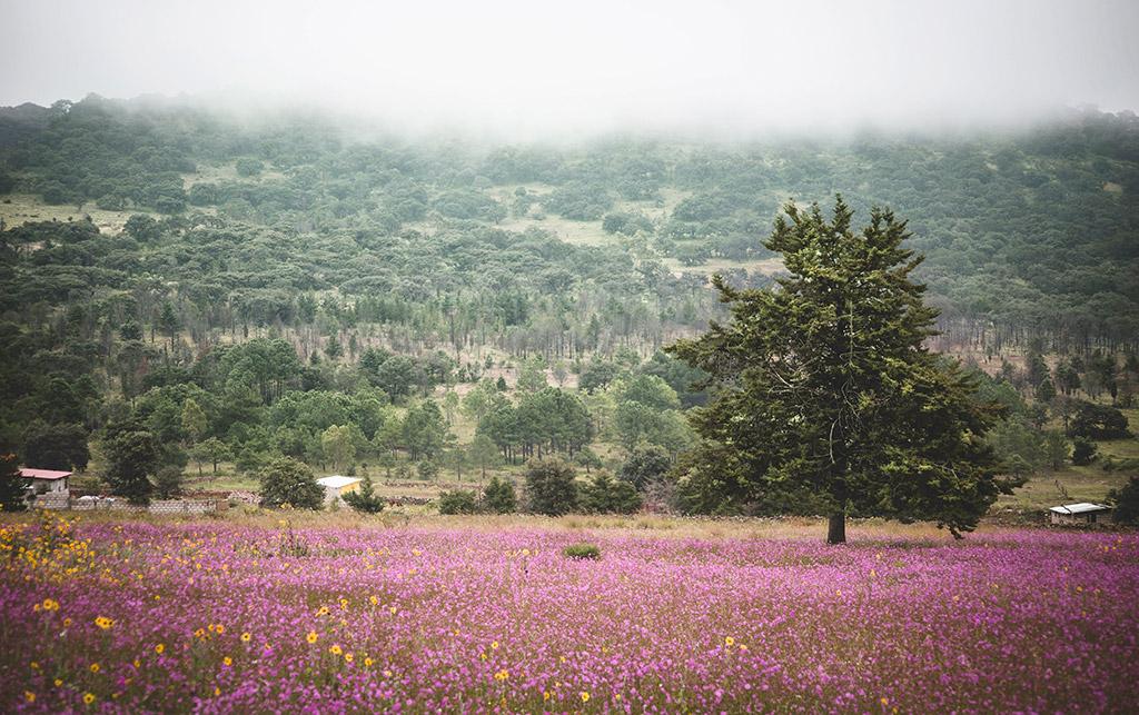 /cms/uploads/image/file/531307/Amealco-Quere_taro-Cerro-de-la-Cruz-web.jpg