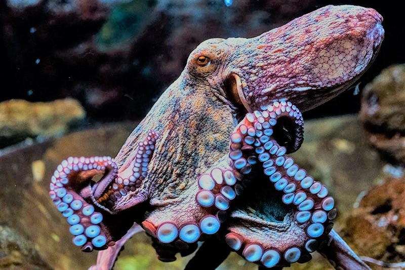 /cms/uploads/image/file/576793/pulpo.jpg