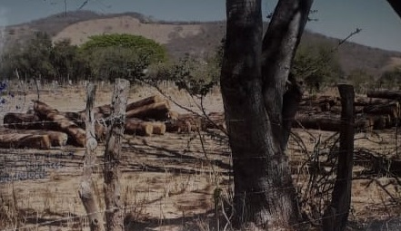105m3 of Pine logs seized in El Chante