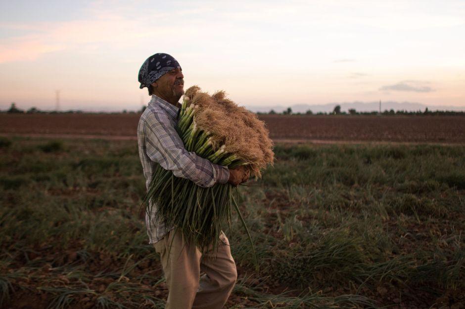 /cms/uploads/image/file/579608/agricultor.jpg