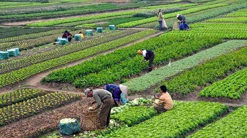 /cms/uploads/image/file/622136/agricultura.jpg