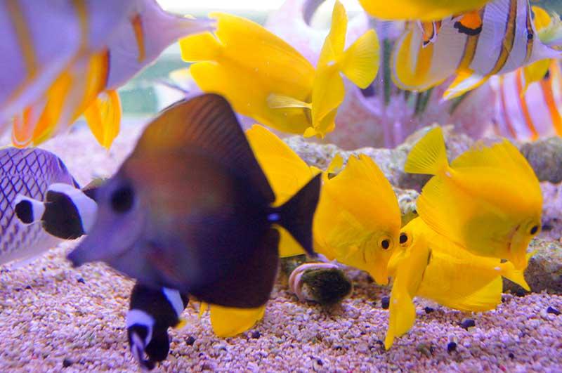/cms/uploads/image/file/628251/peces-ornato-2.jpg