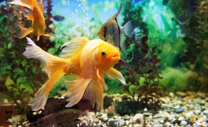 /cms/uploads/image/file/628252/Cuidado-de-los-peces.jpg