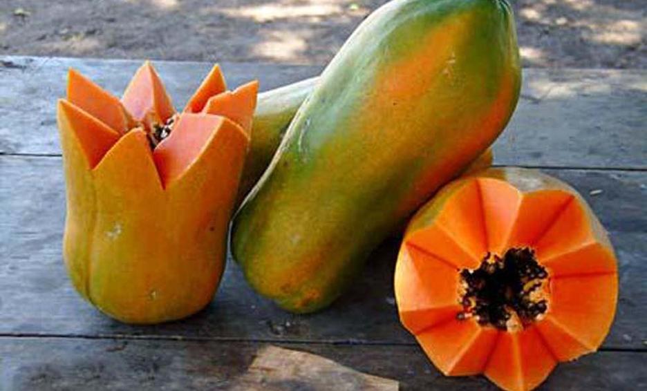 /cms/uploads/image/file/629502/papaya-maradol.jpeg