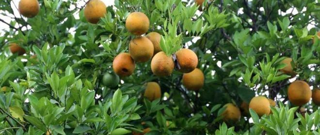 /cms/uploads/image/file/639263/naranjas-veracruz-660x330.jpg