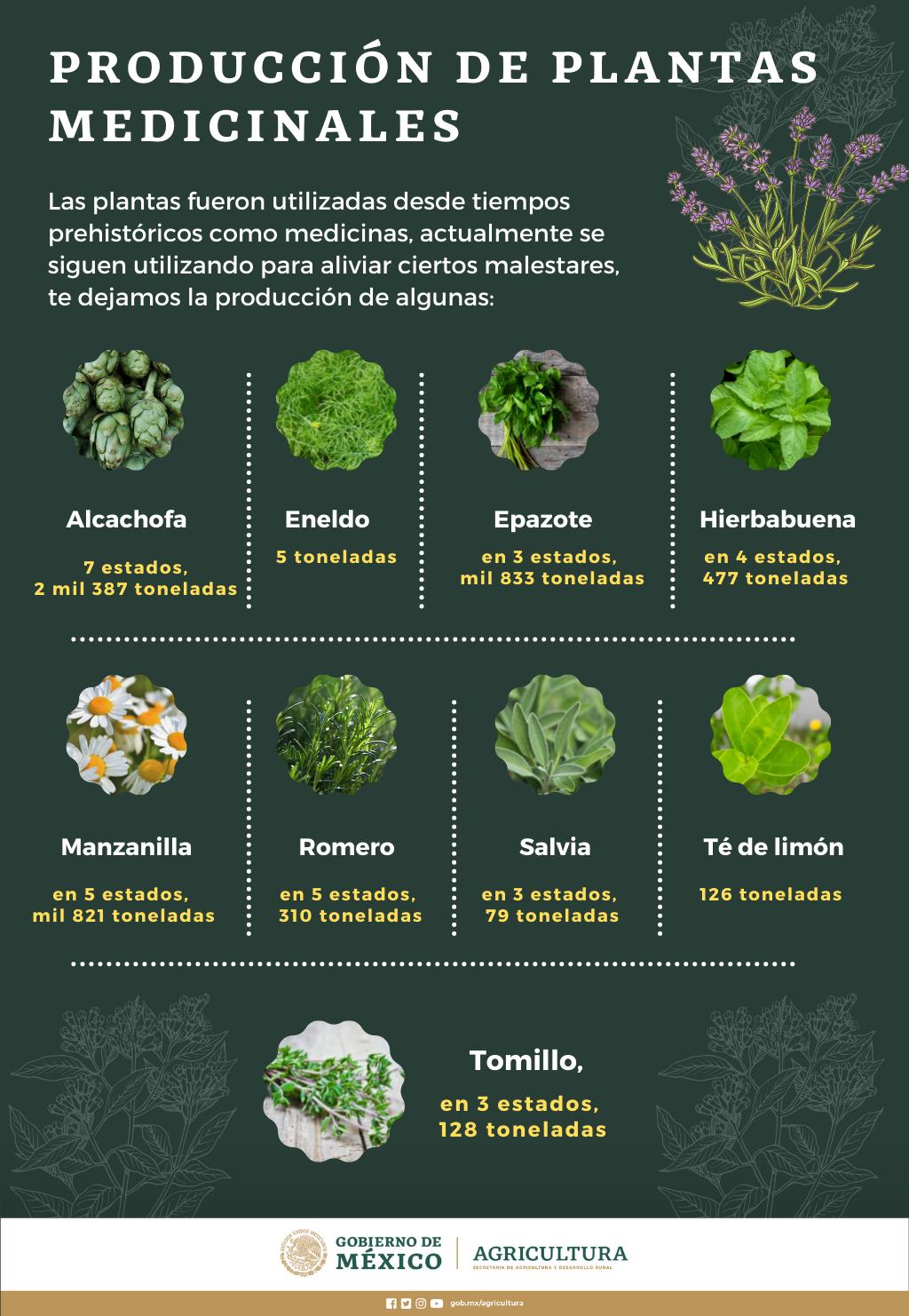 /cms/uploads/image/file/652090/Info_Prod_Plantas_Medicinales.png