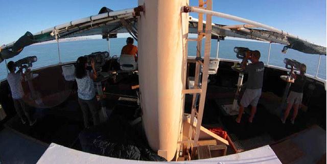Ocean Star Vaquita marinajpg