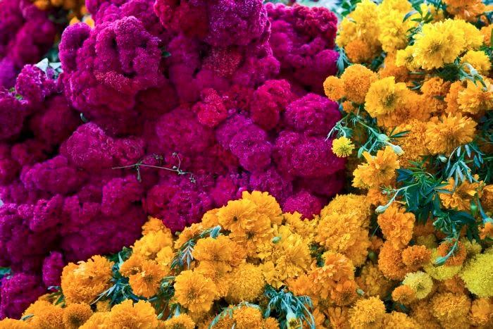 Flor de zempoalxóchitl (Foto: Consejo de la Promoción Turística de México)
