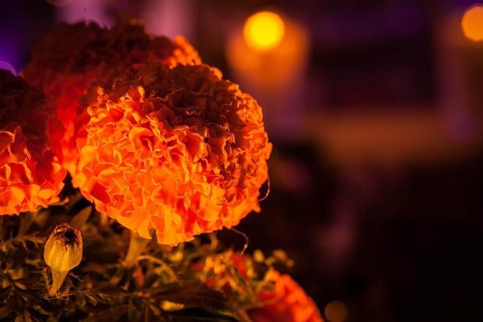 Flor de cempasúchil (Foto: Presidencia de la República)