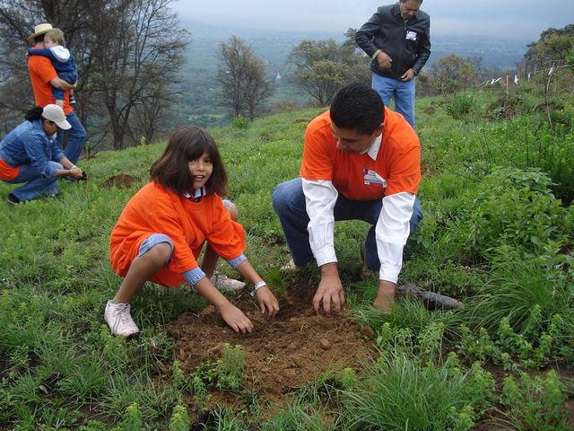 Los árboles reducen los efectos del cambio climático (Foto: Secretaría de Medio Ambiente y Recursos Naturales)