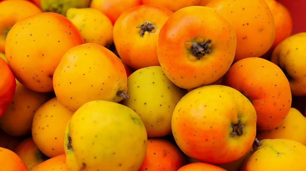 Tejocote. El Tejocote es una fruta de temporada para disfrutar en un rico ponche. (Foto: Presidencia de la República)