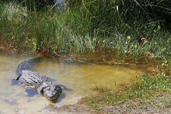 Conservacion de los recursos naturales yahoo dating 5