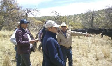 Funcionarios de FIRA realizaron recorridos de campo en diversos ranchos ganaderos, como el de la empresa Ganadería Carretas, SPR de RL
