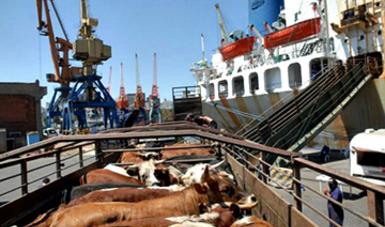 Exportación de ganado bovino