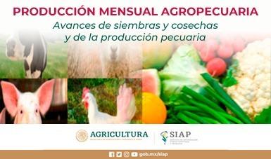 Avances de siembras y cosechas y de la producción pecuaria