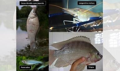 bp244_peces_morelos_sismo_11oct17