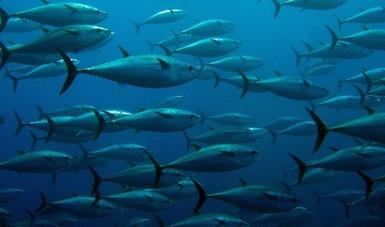 México apelará el fallo de la OMC sobre el etiquetado Dolphin-safe