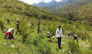 Establecen 925 mil plantas en Aguascalientes
