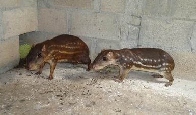 Conservan en Quintana Roo fauna y flora silvestre