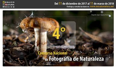 bp247_concurso_foto_arranca_111217