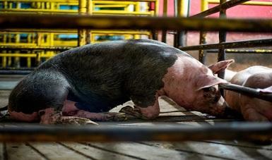Cientos de animales vivos han sido rechazados en puntos de ingreso del país por representar un riesgo sanitario
