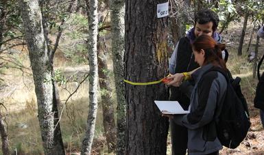 Obtienen certificación nacional tres unidades productoras de germoplasma forestal