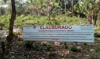 CLAUSURA PROFEPA CAMBIO DE USO DE SUELO EN CIÉNAGA DE TAMASOPO, S.L.P.