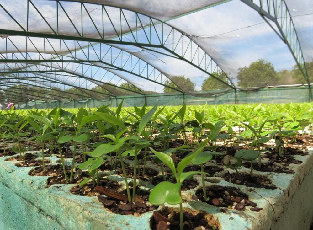 Apoya conafor producci n de un mill n de plantas en for Viveros forestales conafor