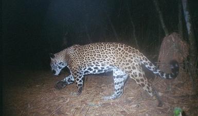 Destina CONAFOR 32.8 mdp a conservación de vida silvestre en Jalisco