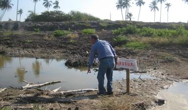 PROFEPA clausuró, de manera temporal parcial, obras y actividades de acuacultura en zona de humedales, en el municipio de Tecomán, Colima, que afectaron 30 mil metros cuadrados de manglar.