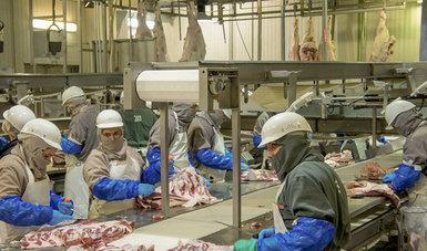 La Industria TIF exporta cárnicos a 58 países, y según datos del Servicio de Información Agroalimentaria y Pesquera (SIAP), México en 2017 se consolidó como el décimo tercer exportador de carne de bovino al mundo