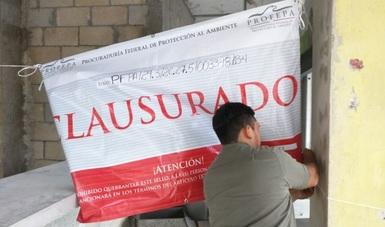 """PROFEPA clausuró de manera total temporal las obras y actividades de construcción del proyecto """"Señor Frog´s Hotel y Hostel"""", Cancún, Quintana Roo, debido a que no cuentan con la autorización de Impacto Ambiental que emite la SEMARNAT."""