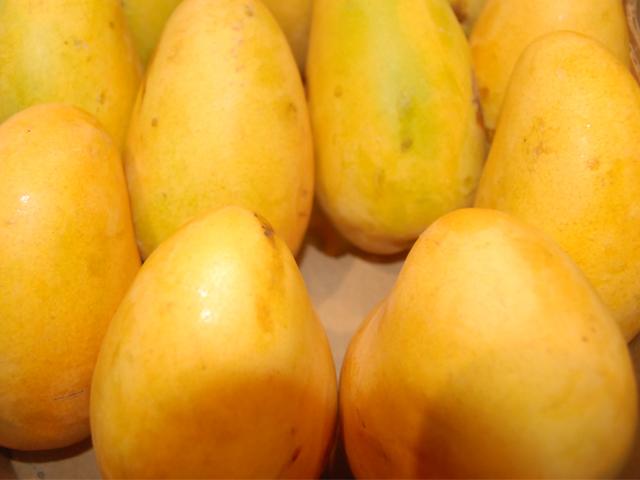 Mejoran estatus sanitario productores de mango en Chiapas