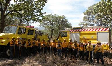 Disminuye 46% la superficie afectada por incendios forestales