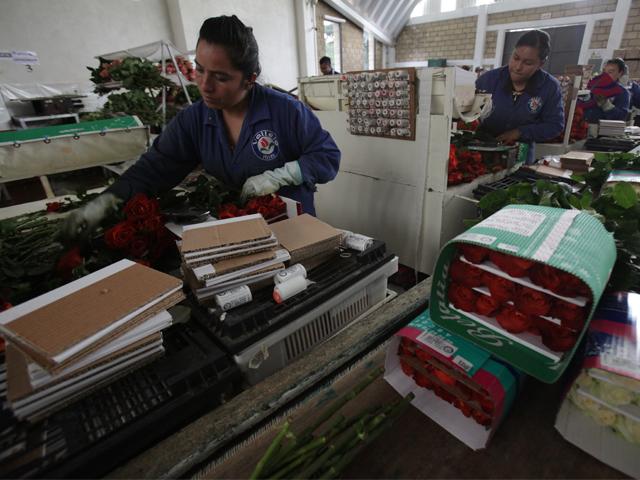 Reportan crecimiento de 2.8 por ciento en el PIB primario al segundo trimestre de 2015