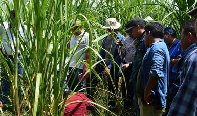 Los trabajos se desprenden de los acuerdos tomados entre el SENASICA, la Unión Nacional de Cañeros (UNC) y la Confederación Nacional de Propietarios Rurales (CNPR)