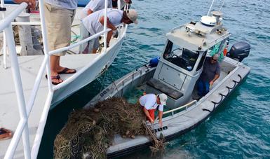 """Se han retirado 175 """"redes fantasma"""", en el Alto Golfo de California con lo que se protege la sustentabilidad y a las especies de la zona, entre las que se encuentra la vaquita marina."""