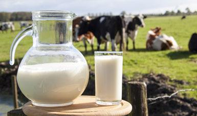 Boletín de leche