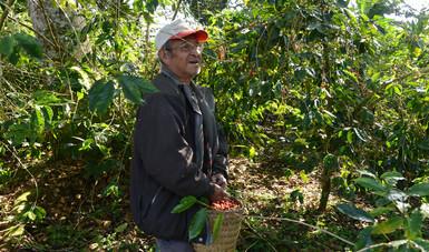 Los compradores conocieron los procesos de cultivo, corte, secado y comercialización del café.