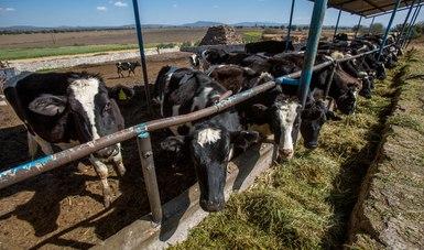 Se prevé que el mercado nacional e internacional de leche mantenga su tendencia de crecimiento a largo plazo.