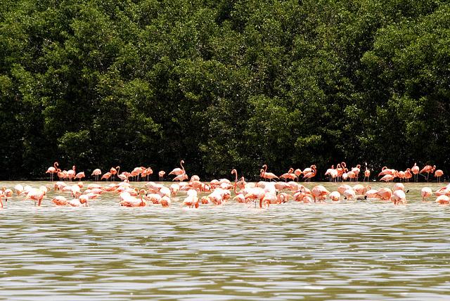 En México las islas están distribuidas a lo largo de todo el país. Actualmente se han registrado cerca de mil 365 cuerpos insulares, con una superficie de cinco mil 127 Km2, equivalente al 0.3 por ciento del total del territorio nacional.
