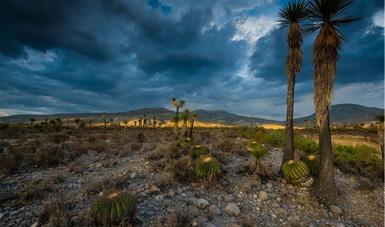 El área natural protegida Tehuacán-Cuicatlán ya es patrimonio de la ... 4085d78718063