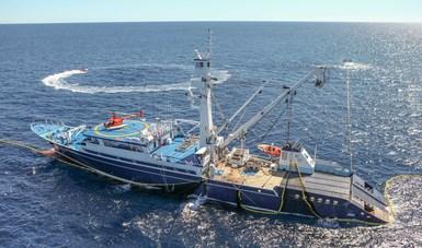 La veda temporal es para la pesca comercial de atún aleta amarilla, patudo, aleta azul y barrilete.