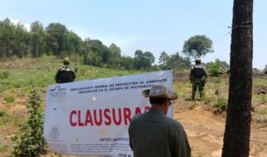 PROFEPA CLAUSURA 23 HECTÁREAS DE HUERTAS DE AGUACATE POR CAMBIO DE USO DE SUELO EN TERRENOS FORESTALES SIN AUTORIZACIÓN, EN MICHOACÁN