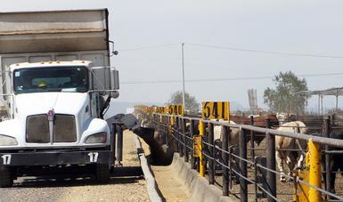 Camión alimentando ganado