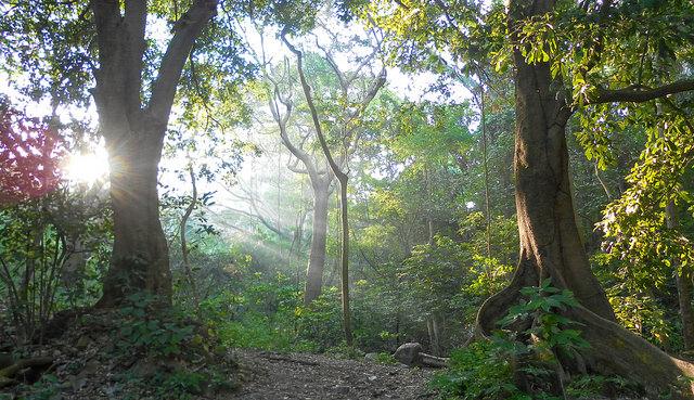 La importancia de las selvas en México pues son fuente de maderas preciosas, leña y diversidad plantas y animales para la subsistencia de comunidades rurales e indígenas.