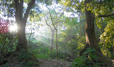 Bosques húmedos podrían desaparecer en México en 2037