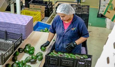 La México Alimentaria 2018 Food Show será el escaparate para los productos agroalimentarios con alto potencial de mercado.