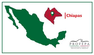 PROFEPA en coordinación con CONANP, atiende y da seguimiento a la contingencia por la mortandad de tortugas marinas en la zona del Santuario Tortuguero de Puerto Arista, en el municipio de Tonalá, Chiapas.