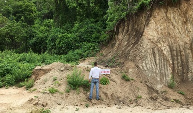 CLAUSURA PROFEPA PREDIO POR ILEGAL CAMBIO DE USO DE SUELO EN TERRENOS FORESTALES, EN MANZANILLO, COLIMA
